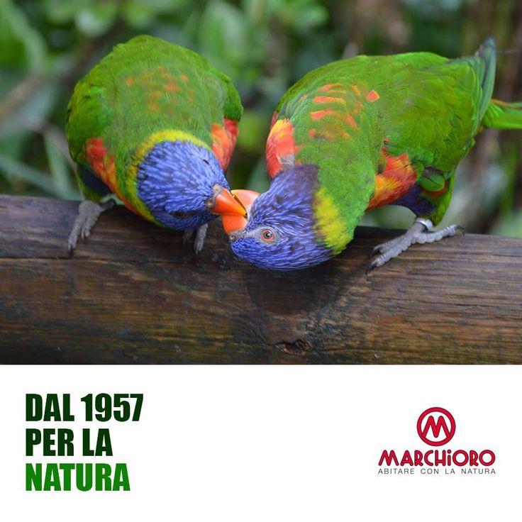 Dove c'è Passione  c'è Amore! #amore #bird #animals #nature #marchioro #green
