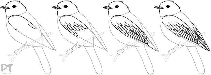 Best 25+ How To Draw Birds Ideas On Pinterest