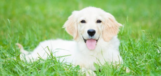 تفسير رؤية الكلب في المنام ومعناه Artificial Grass For Dogs Dogs Real Dog
