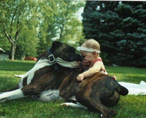 boxer & baby