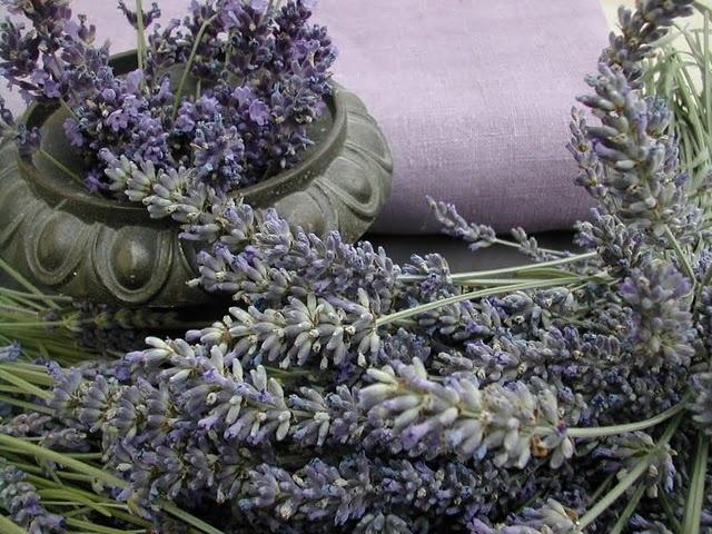 lavender lavender lavender