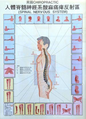 Spinální nervový systém