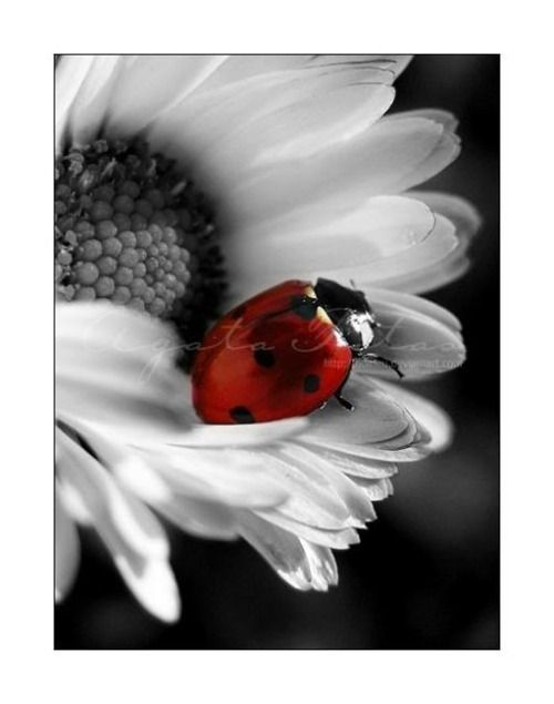 *black, white & red #Pinterest Pin-a-way