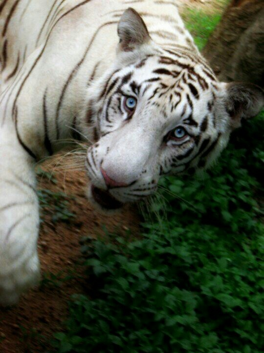 Eyes to die for ! (captured at Bannerghatta National Park