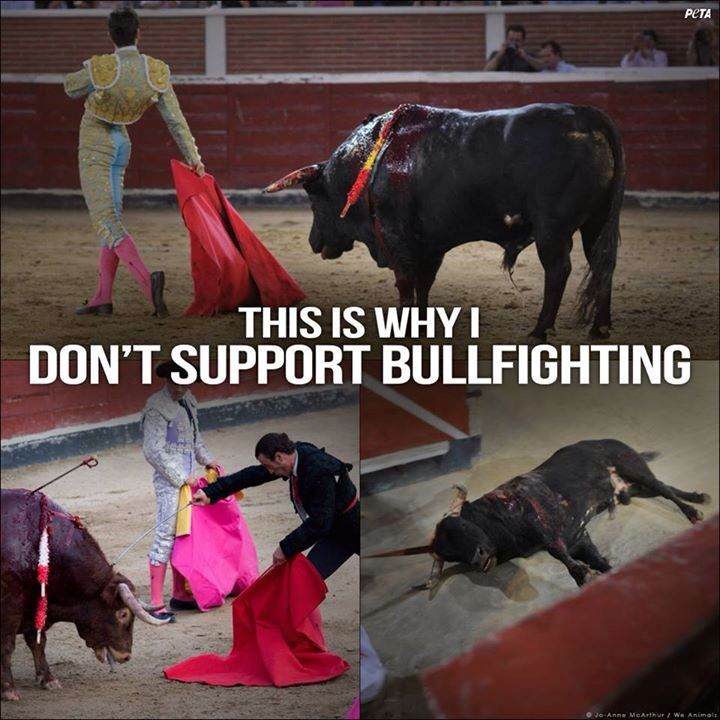 why animal cruelty should be stopped Every day, we're fighting the worldwide injustice of animal cruelty while every   bullfighting cruelty: not so entertaining a bullfight  join our efforts to stop it.