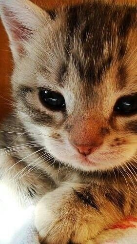 子猫は癒されますね~♪ もっと見る