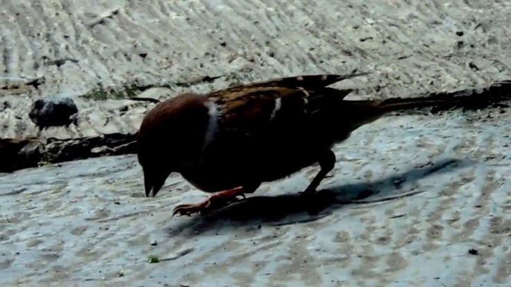 sparrow sony H400 Lightworks