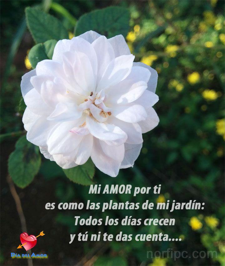 Mi amor por ti es como las plantas de mi jard n todos los for Amor en el jardin