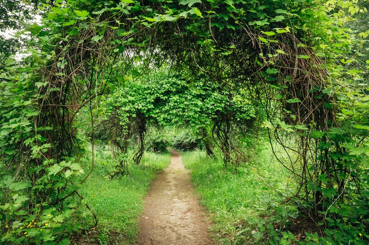 Walkway Lane Path With Green Trees And Bushes In Garden. Beautiful Alley In Park.