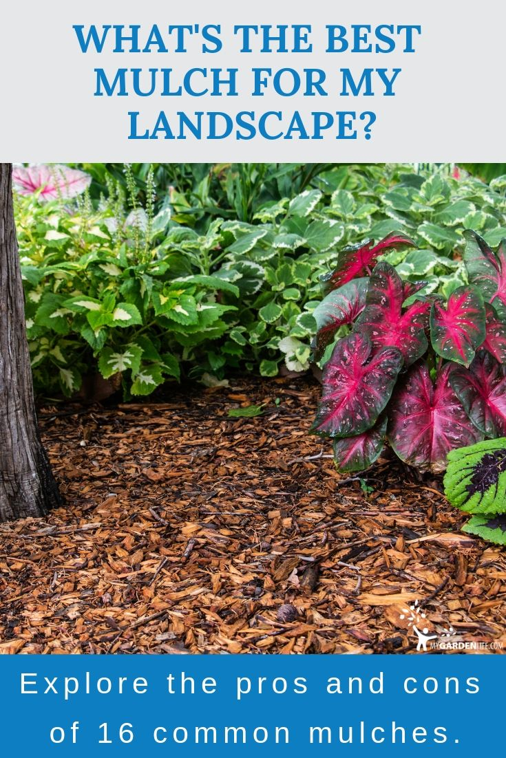 Pin On Gardening Tips And Tools My Garden Life