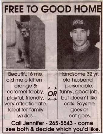 Free cat or boyfriend