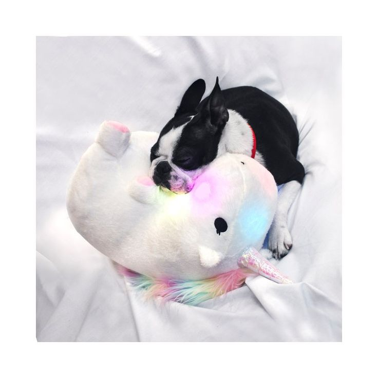 47 best Unicorns are jerks images on Pinterest Rainbows, Gift - selbstgemachte geschenke aus der k amp uuml che