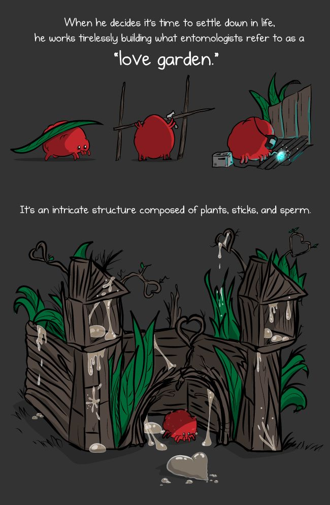 Just awesome: This is a red velvet mite and he is here to teach you about love - The Oatmeal