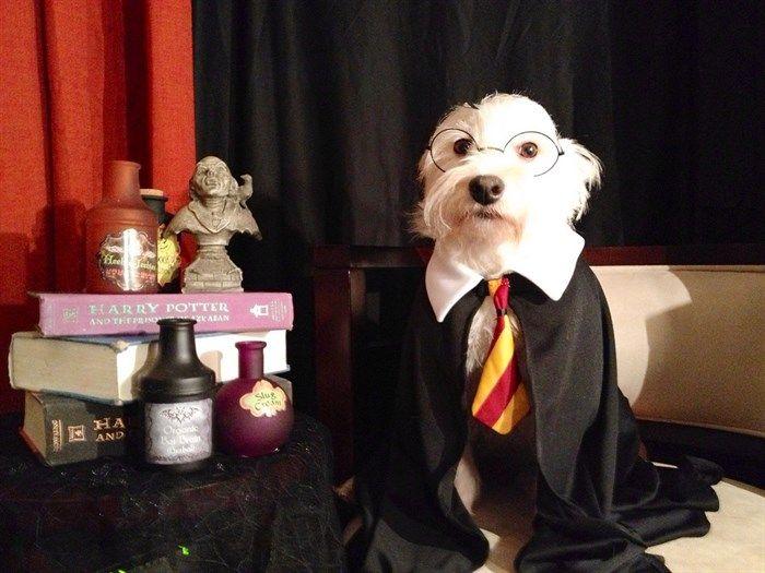 http://www.mascotasblogueras.com/curiosidades/magia-en-perros-donde-esta-la-galleta