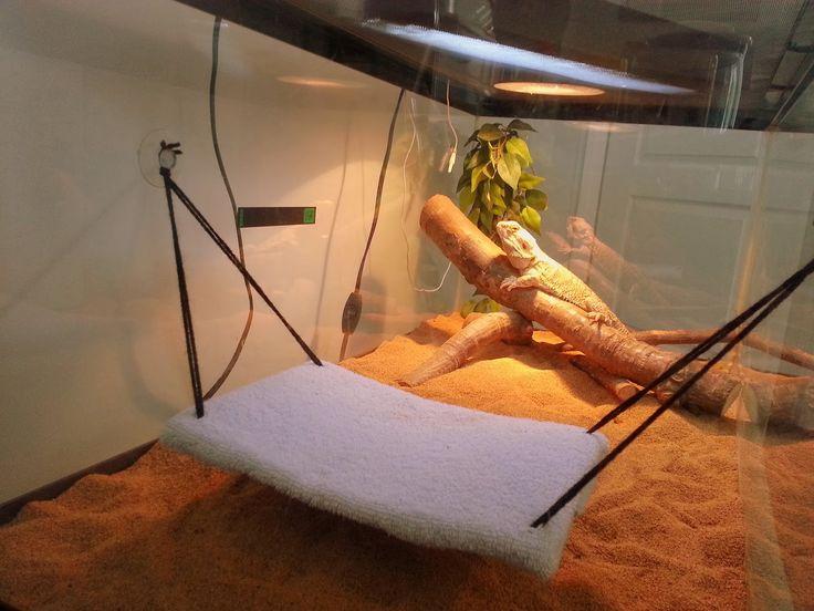 Procraftination!: Bearded Dragon Hammock