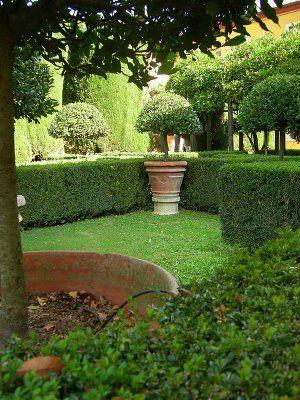 nice box hedging