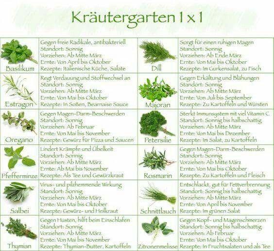 Kräutergarten 1×1