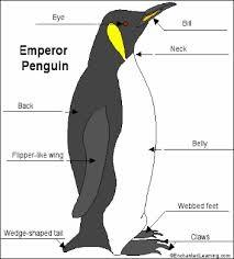 Homework help with emperor penguin