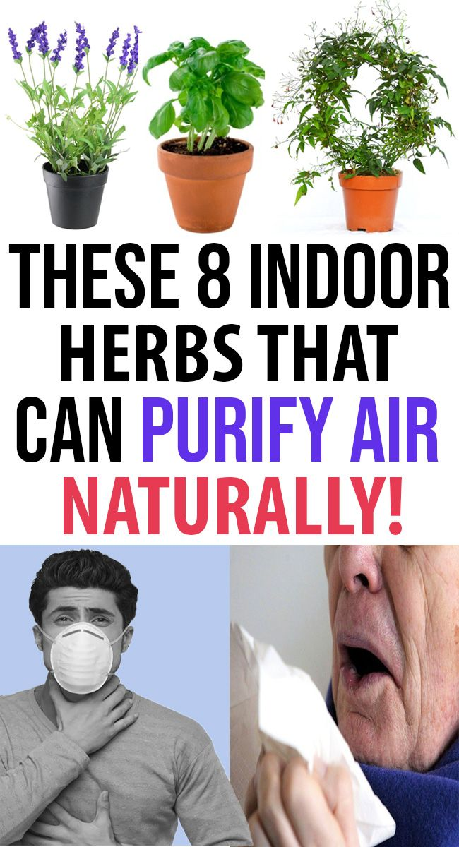 We Have Gathered Best 8 Aromatic Indoor Herbs Which Works Wonderful In Purifying The Air And Protecting Your Health Gives You Peaceful Sleep