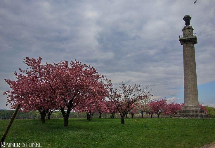 Die Konstitutionssäule bei Gaibach in Unterfranken.  Auch wenn dieses Bauwerk nicht so ganz ins Beuteschema dieser Seite passt möchte ich die Konstitutionssäule in Gaibach zeigen. Sie ist eines der Wahrzeichen dieses unterfränkischen Dorfes und steht im Schlosspark auf dem Hügel des Sonnenbergs.  Bei unserem Besuch im April 2011 hatten wir richtig Glück und all die Bäume der Japanischen Blütenkirsche (Prunus serrulata) um die Säule herum zeigten ihre volle Blütenpracht.  Der ideale…