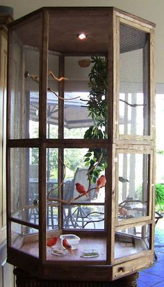 ♥ Pet Bird Cage Ideas ♥ Would love to have a cage like this out on my new patio.