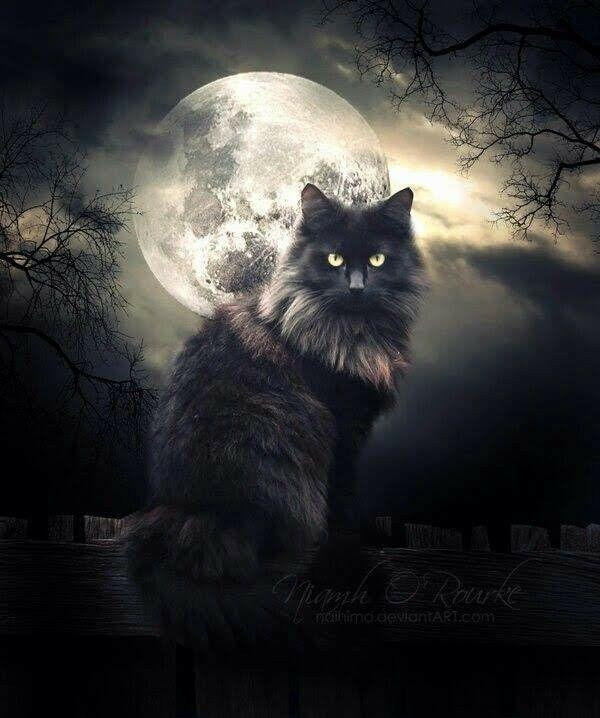 большие человеку стали нравиться коты мистика ли это смешать