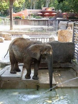 Barcelona Zoo: Barcelona Travel Food, Zoos Travel, Barcelona Zoos, Baby Elephants, Cute Ideas, Favorite Animal, Places, Great Ideas, Dreams Animal