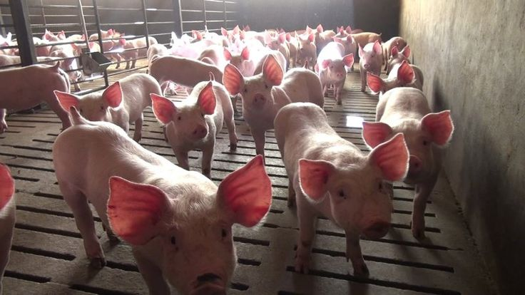 Petition · Dr. Dan Englejohn: USDA: Don't allow the factory farm industry to define animal welfare claims on food labels · Change.org