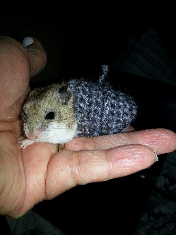 Knitting Pattern For Hamster Jumper : Hamster Sweater Crochet & Knit items made Pinterest Hamsters and Sw...