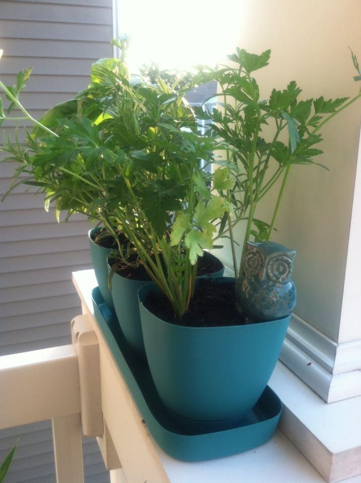 apartment herb garden images