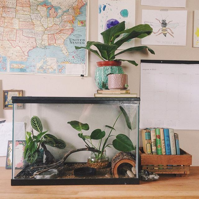 Study Room With Aquarium: 178 Best Classroom Aesthetics And Set-up Images On