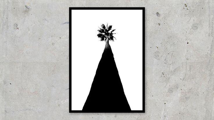 Palm Tree California #nature #palm #tree #california #sanfrancisco