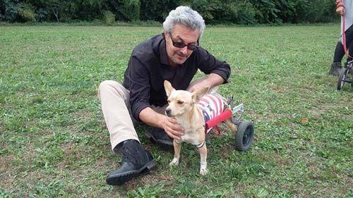 La Legge quadro su animali daffezione e randagismo compie 25 anni