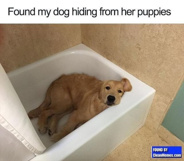 Clean Memes 01 13 2019 Evening Cute Dog Memes Funny Dog Memes Cute Funny Animals