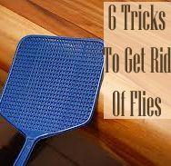 6 tricks to get rid of flies