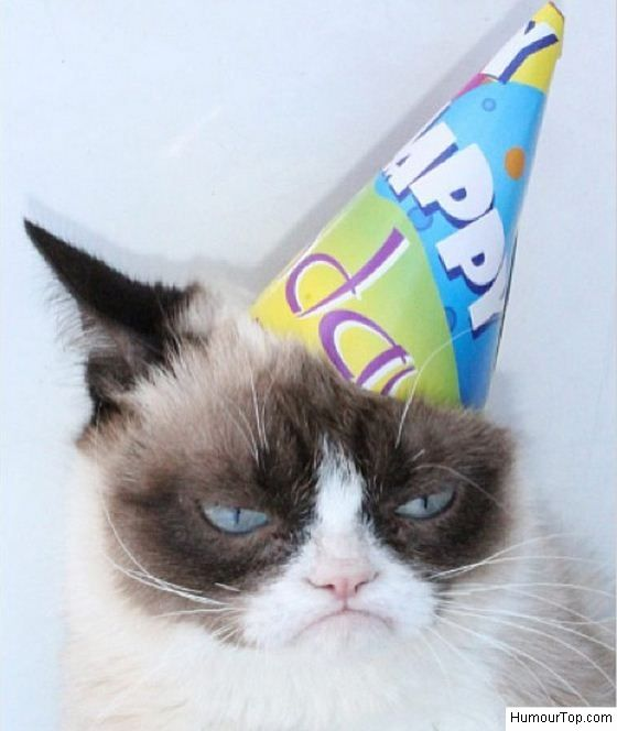Tard avec un chapeau d'anniversaire sur la tête