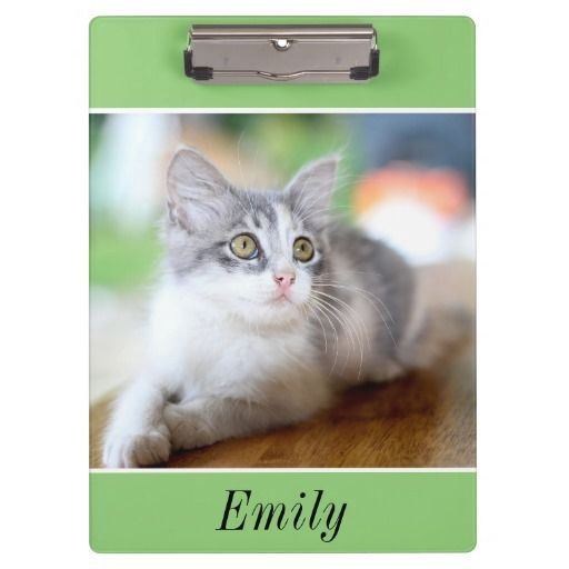 Cute Grey and White Kitten on Green Clipboard
