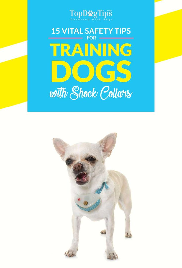 15 Vital Safety Tips for Training Dogs with Shock Collars (A Must Read!) An electronic dog collar is a dog training device, also known as dog shock collar, that delivers a small electric shock when the trainer presses a button on a remote control. #dog #training #collars #shock #electronic #ecollar #tips #safety #dogs #pets