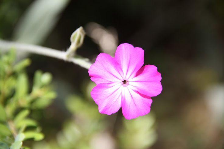 Λουλουδάκια - Βάλια Κάλντα
