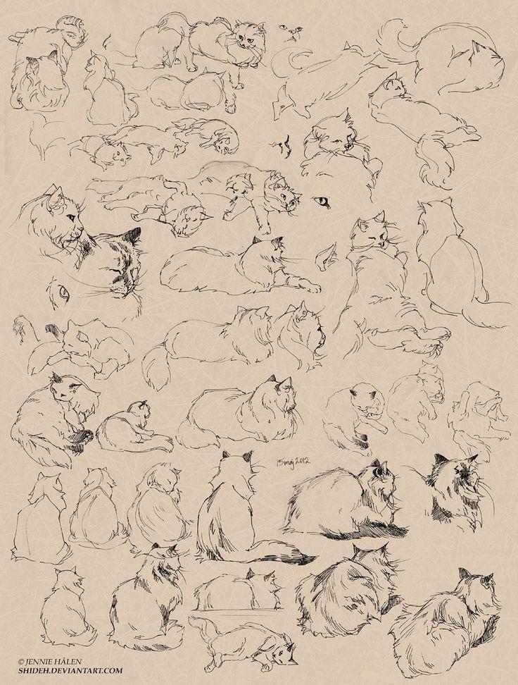 Cat sketches by shideh.deviantart.com