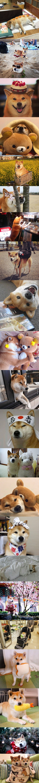 Doge Lovers - 9GAG: