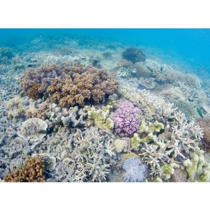 ‪A mind-boggling coral ecosystem beneath the world. ‪#‎Throwback‬ ‪#‎GrabYourDream‬ #corals #Australia #beach #underwater #scubadiving
