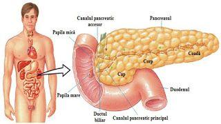 Medicina Naturista: Retete Naturiste de curatare a pancreasului