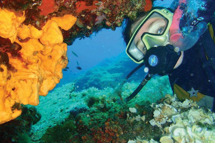 scuba diving at Paros Dive safely! There are many diving schools with qualified people and all the necessary equipment!