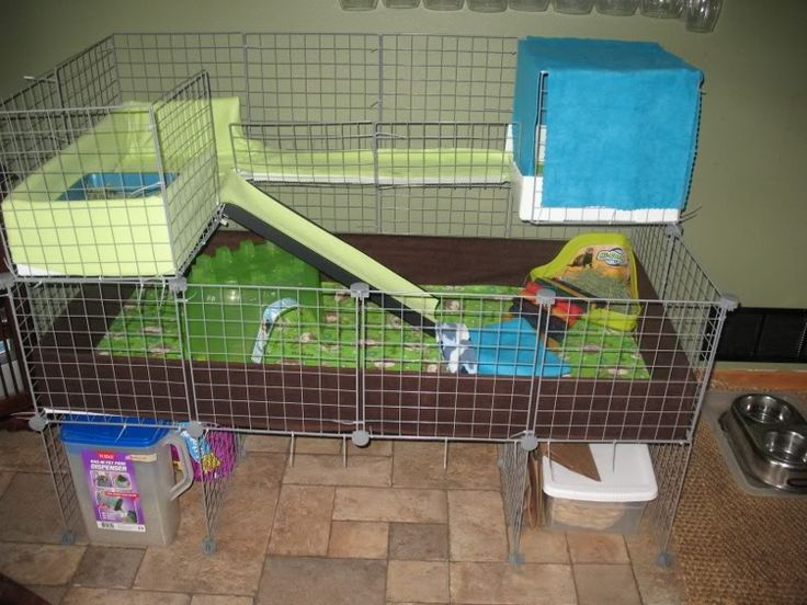 Attractive C&C guinea pig cage. 2x4 base with two 2x1 lofts. # guineapigs  ND68