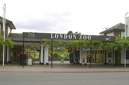 London Zoo - holds a special place in Lucy's heart.