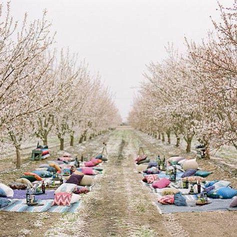 Cherry blossoms & picnic blankets. Loving this ceremony setting via…