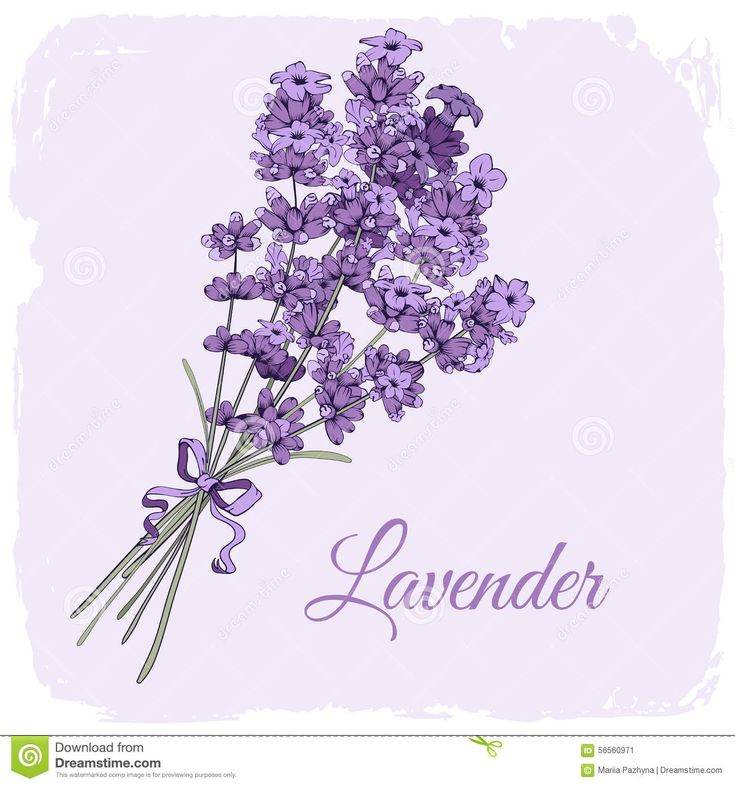 Lavender Background Stock Vector - Image: 56560971