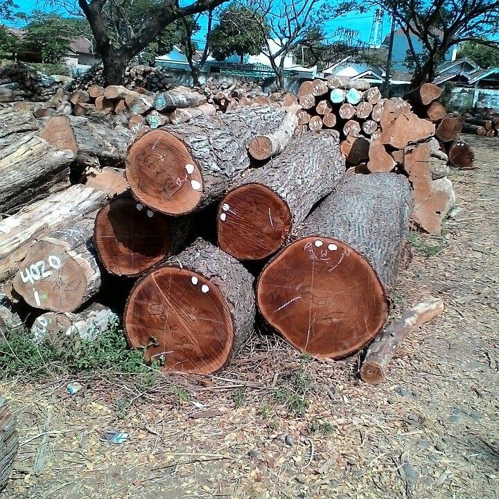 mahoni wood