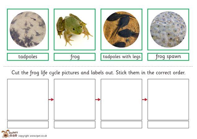 Teacher's Pet - Frog life cycle sort activity - FREE Classroom Display Resource - EYFS, KS1, KS2, frog, frogs, life cycle, tadpoles